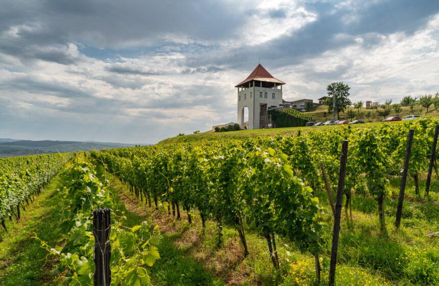 Villa Vinea: Vinuri din inima Transilvaniei